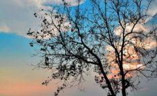 Pohon Yang Berbuah